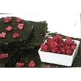 フランス産 木苺(ラズベリー)つぶし用(カット) 1kg シコリ社 ランキングお取り寄せ
