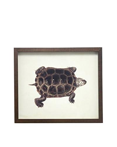 Turtle on Linen Brown Shadowbox Art
