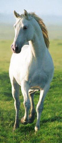 40521 Pferde - Weisses Pferd Fototapete Poster-Tapete (200 x 86 cm)
