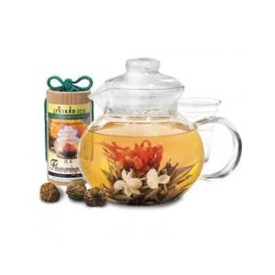 Primula Flowering Tea Pot Set