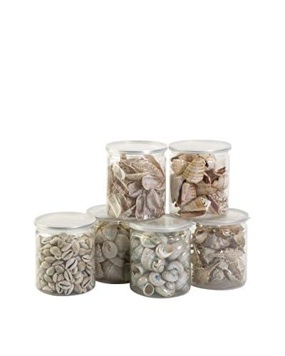 Set of 6 Assorted Oceana Natural Shell Filler
