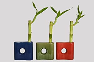 KL Design & Import - 3 Contemporary Vases with 3 Stalks 6