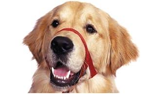 Jorvet J1011C Halti Head Collar for Dogs, Size 2