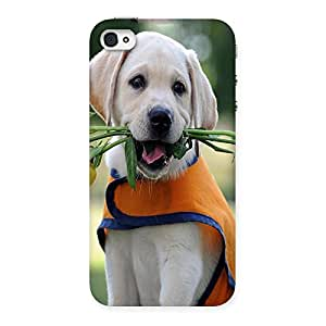 Ajay Enterprises Dog With Flower Back Case Cover for iPhone 4 4s