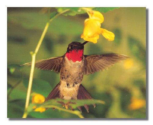 Hummingbird Sucking Flower Nectar Close Up Photo Wall Picture 8x10 Art Print