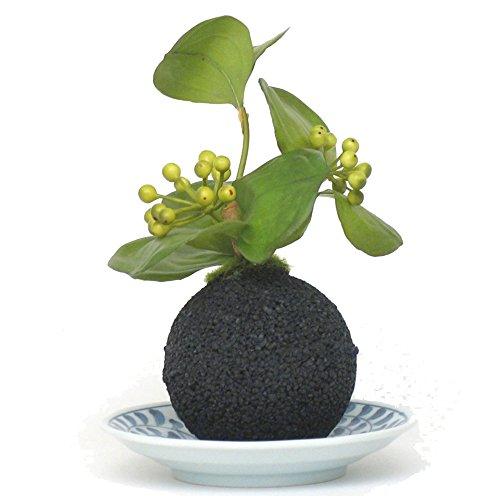 盆栽 インテリアグリーン サンキライ & 消臭 竹炭ボールeco-pochi (たこ唐草平皿) 高さ約21cm