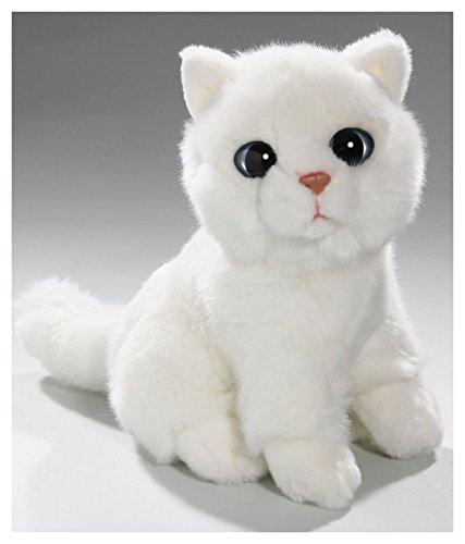 Katze sitzend weiß mit großen Augen, Hauskatze