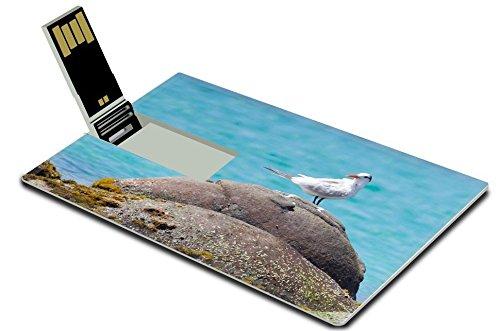 Luxlady 32GB USB Flash Drive 2.0 Memory Stick Credit Card Size IMAGE ID 21302024 Royal Tern Thalasseus maximus maximus on a rock at Saint Martin Caribbean
