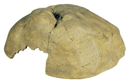 Exo Terra Reptile Cave Extra LargeB0002AR5BU : image