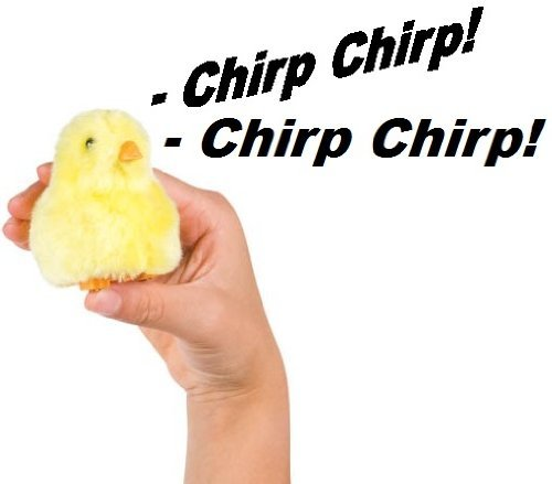Chirpin' Chick Novelty Toy