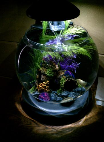 Tetra 29008 waterfall globe aquarium for Aquarium waterfall decoration