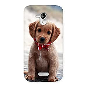 Cute Looking Puppy Multicolor Back Case Cover for Micromax Canvas HD A116