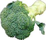 九州産 ブロッコリー 凝縮された森。(和名・緑化野菜)  1株 九州の安心・安全な野菜! 【九州・福岡・佐賀・長崎】