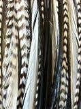 Extension Plumes à Cheveux Naturelles Coiffures Stylisme Top Qualité Coq Véritable - 5 Différentes Couleurs Par VAGA®