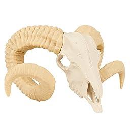 3D Printed Ram Skull (Medium)