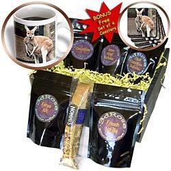 Wild animals - Red Kangaroo - Coffee Gift Baskets - Coffee Gift Basket by 3dRose LLC