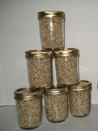 Brown Rice Flour&vermiculite Mushroom Substrate 6 Jars (1/2 Pint Jar) Growing Kit (Vermiculite Jars compare prices)