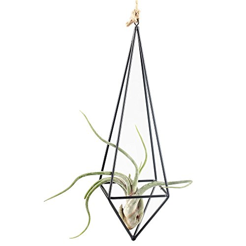 Rustic Style Freestanding Hanging Metal Tillandsia Air Plant Rack Holder Black 10 inches Height Quadrilateral Pyramid Shape Geometric (Freestanding Plant Hanger compare prices)