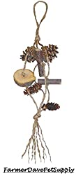 Apple Wood & Pine Cone Chew Toy for Small Animals