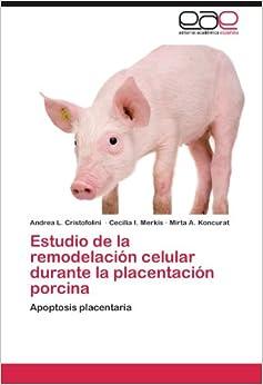 Estudio de la remodelación celular durante la placentación porcina