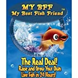 My Best Fish Friend BFF As Seen On TV ~ As Seen On TV