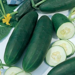 *100+seeds Straight Eight Cucumber an All-american Winner in 1937 the Best Tasting Cucumber Ever by Seeds and Things
