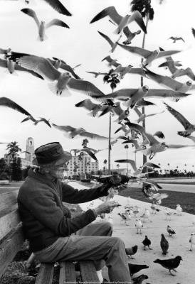 (13x19) Feeding Birds 1978 Archival Photo Poster
