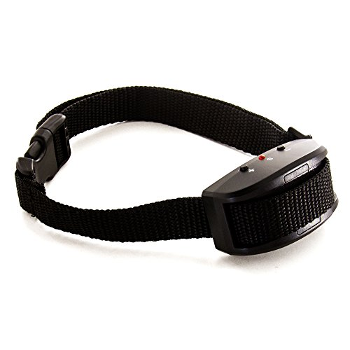 Small Dog Shock Collar Petsmart