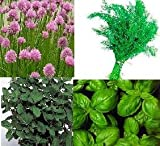 4 Varieties of HERB SEEDS - Chive, BASIL, Marjoram, Dill