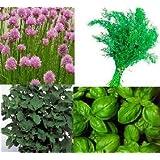 4 Varieties of HERB SEEDS - Chive, BASIL, Marjoram, Dillby Jack Smiths