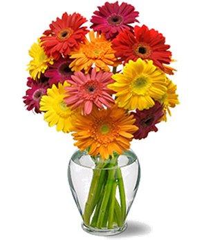 Flowers - Cheery Gerbera Daisies