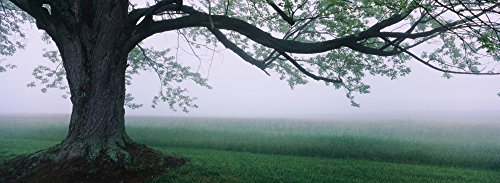 panoramic-images-tree-in-a-farm-knox-farm-state-park-east-aurora-new-york-state-usa-photo-print-9144