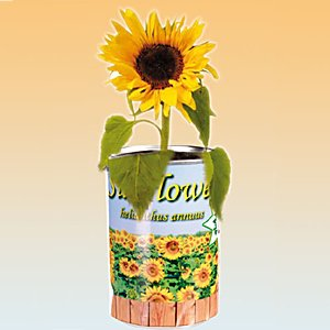 Grow Your Own Sunflower &#8211; Plant in a Tin