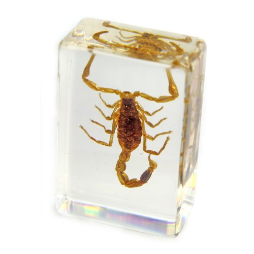 "Golden Scorpion Paperweight (1.8x1.1x0.8"")"