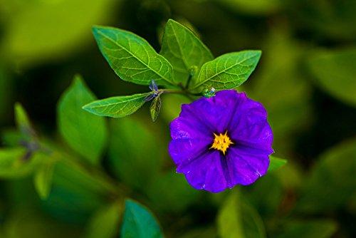 141227-47-violet-a4-ingarbugliato-photo-graph-lavorata-a-mano-original-fine-art-by-p-matanski-for-ho