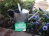 Lawn &amp; Patio - Nemaslug Slug Killer 40 sq m - same-day despatch