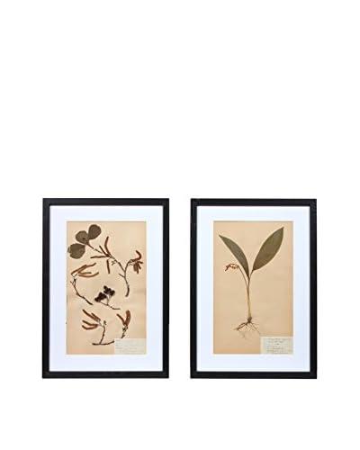 Pair of Framed Herbarium XXIV Artwork, Natural/White/Black