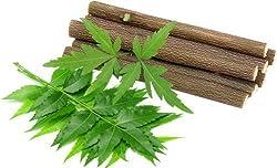 RHBP - Organic Neem Chew sticks for healthy teeth and gums - 20 Sticks