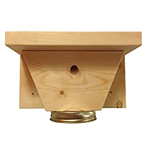 Amazon.com : Carpenter Bee Trap (Without Mason Jar) : Patio, Lawn