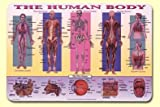 Painless Learning Human Body Placemat