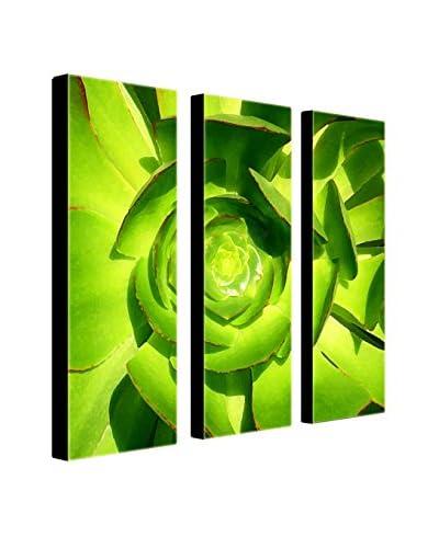 "Amy Vangsgard ""Succulent Square"" 3-Panel Art Set"