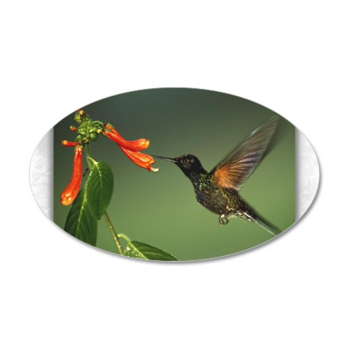 22x14 Oval Wall Vinyl Sticker Green Violetear Hummingbird