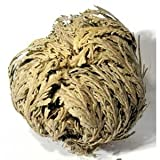 Herbs-Rose of Jericho-Whole