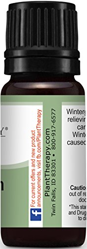 Wintergreen-Essential-Oil-100-Pure-Undiluted-Therapeutic-Grade