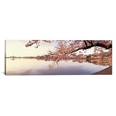 iCanvasART Cherry Blossoms at The Lakeside Washington Dc, USA by Panoramic Images Canvas Art Print, 36 by 12-Inch
