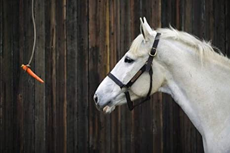 Horse to Carrot