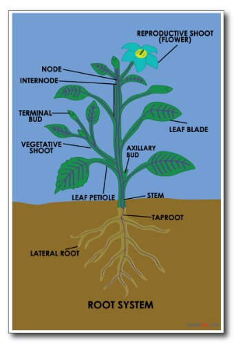root-system-new-science-classroom-poster