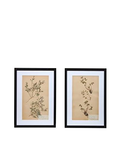 Pair of Framed Herbarium III Artwork, Natural/White/Black