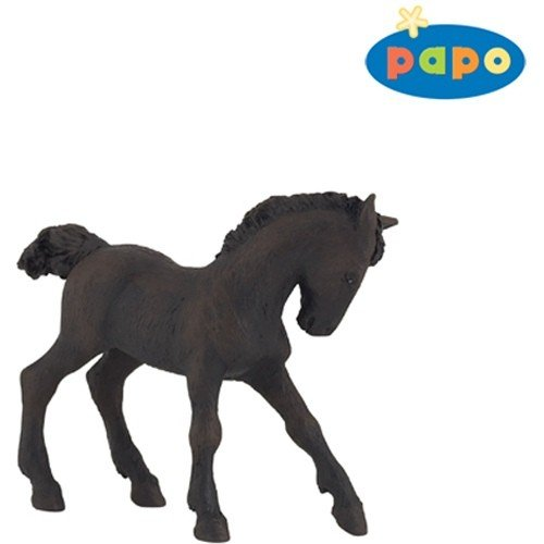 Frisian Foal