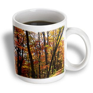 Dawn Gagnon Photography Trees - Autumn Trees, Dark Tree Trunks Highlighted By Golden, Russet And Red Leaves Of Autumn - 15Oz Mug (Mug_153675_2)